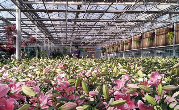 從新竹農博會探訪傳統栽種到農業旅行的躍遷