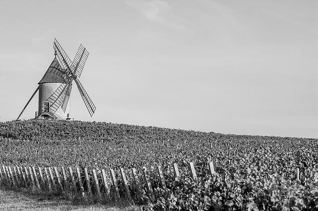 中歐農業協作機會史無前例 花費進級拉動市場優良産品順勢而上