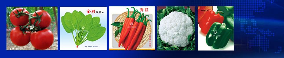 广州市兴田种子有限公司