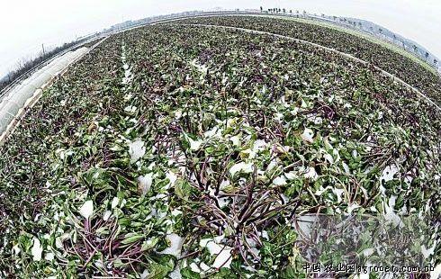 湘潭市红盹�dy�^�_湘潭市蔬菜生产受低温影响 但供应充足(图)