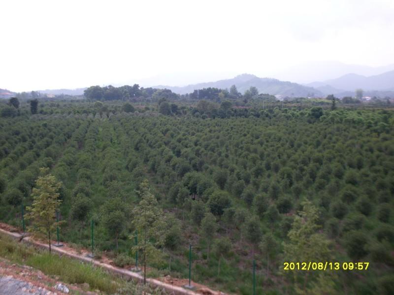 产 地:江西  宜春市  奉新县  销售区域