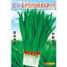 嘉兴宽叶新一号--白梗韭菜种子