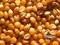 求购玉米,碎米,青饼,高粱