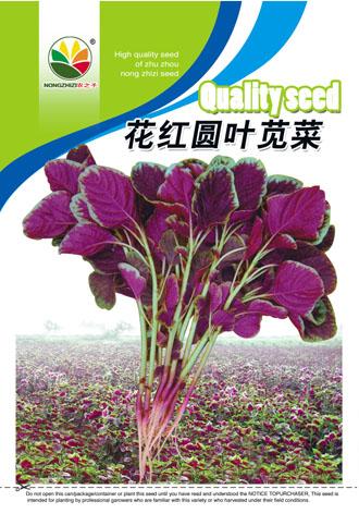 求购笕菜种子