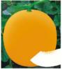 九红蜜―甜瓜种子招商