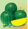 小兰―西瓜种子招商