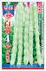 白箭4号特嫩架豆——菜豆种子