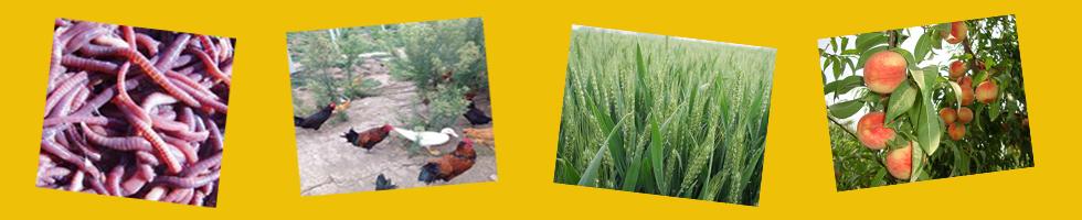 泰州市春光生态农业发展有限公司