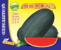 超级黑美人―西瓜种子招商