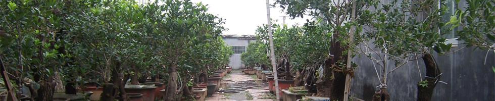 寿光市德泰桂花园