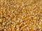 求购玉米、大豆、高粱、碎米等