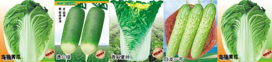 青島城陽科達蔬菜研究所