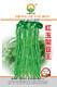 红玉架豆王——菜豆种子