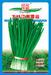 大叶江南雪韭——韭菜种子