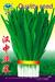 汉中韭菜—韭菜种子