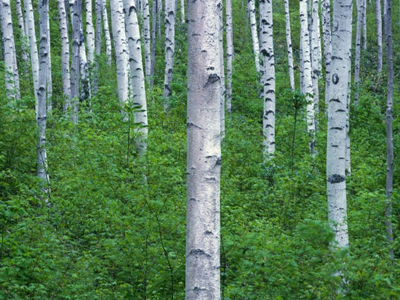 目前,云南省林地面积3.91亿亩,森林覆盖率59.7%,森林蓄积量19.