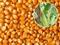 求购玉米大豆