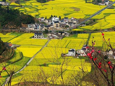 合肥山南镇夯实美丽乡村建设(图),农业资讯,中国农业
