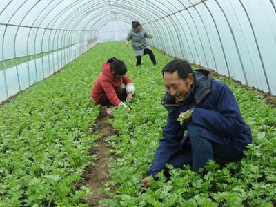 河南光山:特色蔬菜种植富农家(图)