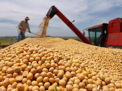 谷物交易商待关税降低后再重返美国市场