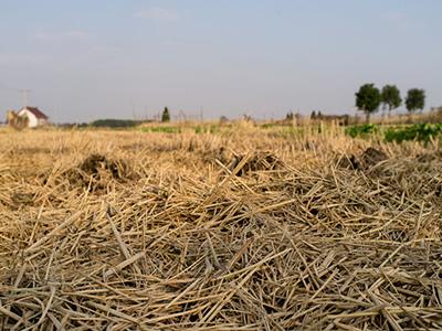壁纸 成片种植 风景 干旱 干涸 缺水 土地 植物 种植基地 桌面 400