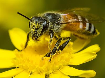 衡阳养蜂人的 甜蜜 脱贫路图片