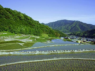 水价综合改革让农业更环保更有保障