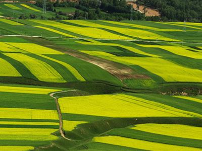 金华磐安标准农田质量提升项目获省农业丰收奖(图)