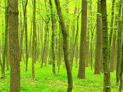 禁止在生态功能重要区林地建风电场