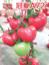 冠夏A72—番茄種子