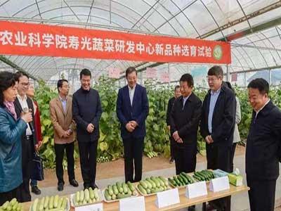 山东寿光加快蔬菜转型升级