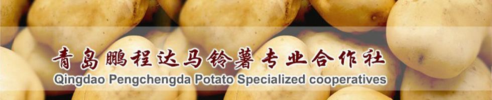 青岛鹏程达马铃薯专业合作社