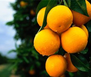 这个橙子不走寻常路!
