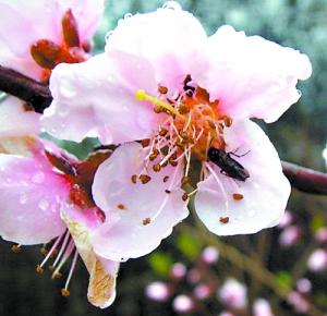 春暖花繁 你分得清这些花吗?