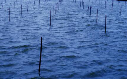 渔业协会将成立中国渔业大数据研究院
