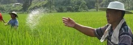 新疆:30吨肥料送到田间地头促增收