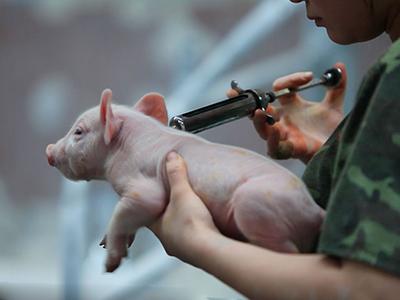 猪业安全生产迫切需要动物营养与饲料科技攻关