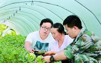 湖南:技术服务进大棚