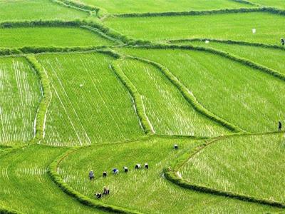 有機農業就是不用肥料 不打藥?