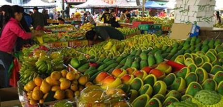 儋州:大力推廣熱帶水果種植