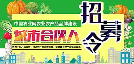 中國農業網城市合伙人招募啦!